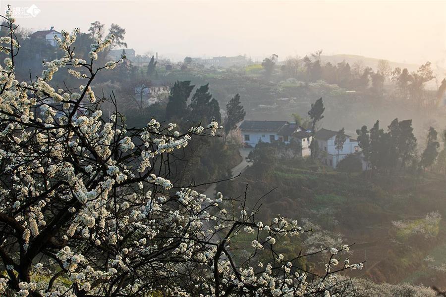 剑网三稻花村风景