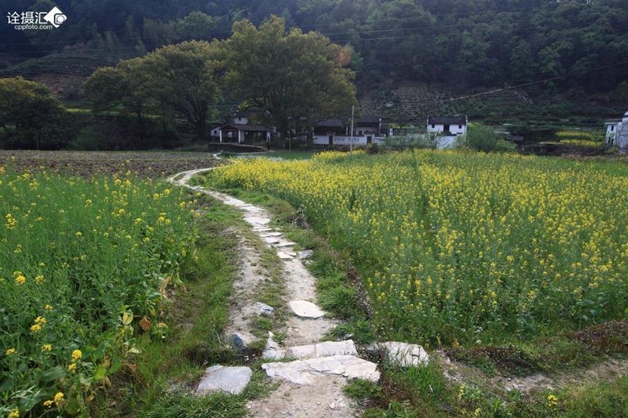 乡村的小路