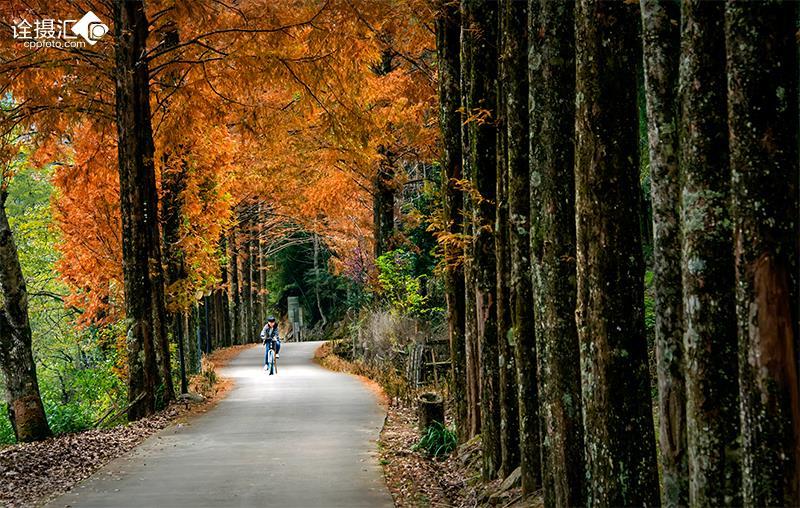 壁纸 风景 森林 桌面 800_508图片