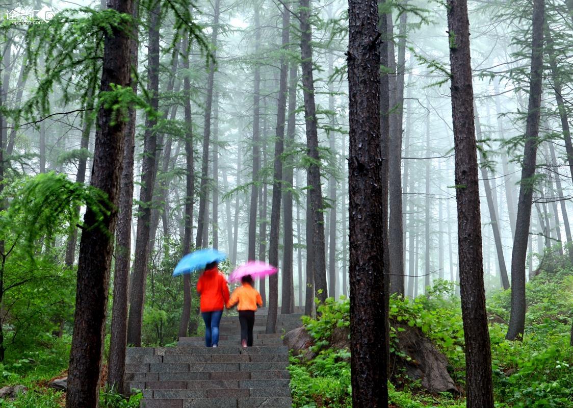 雨中森林 gif