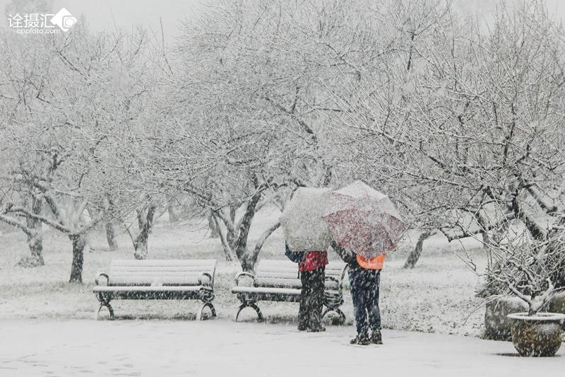 大雪风景图