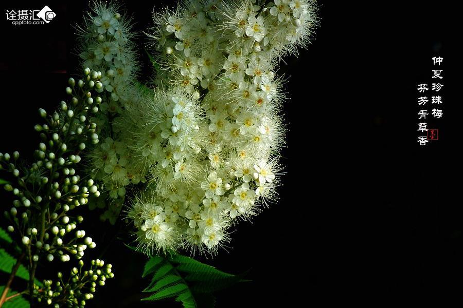 芬芳青草香