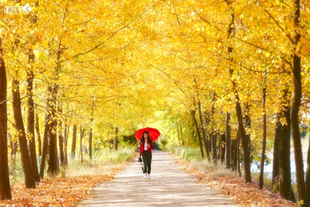 学前班秋天的树林简笔画