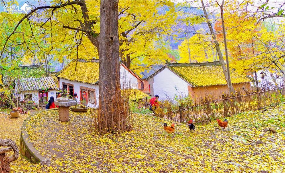 美丽乡村----农家秋色