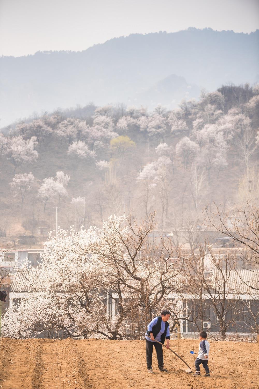 初春的大地上,乡亲在田地里劳作  —— 刘尊拴 摄